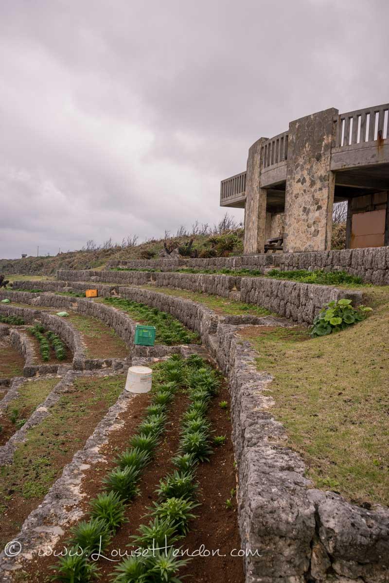 lily field park ie island jima okinawa japan